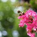 写真: 咲き誇る