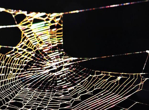 蜘蛛の巣アート