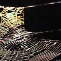 写真: 蜘蛛の巣アート