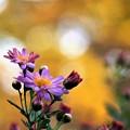 写真: 秋色に