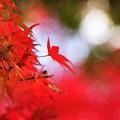 写真: RED