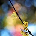 Photos: 冬に咲く