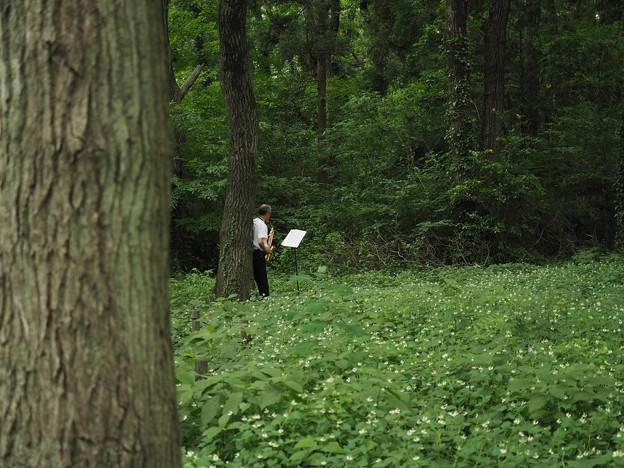 森のサックス奏者