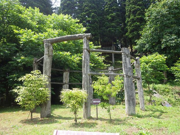 環状木柱列