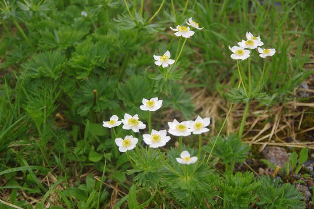 夏近し、立山の花々