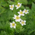 Photos: 立山の可憐な花々