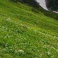 Photos: 雷鳥坂の谷間の花々