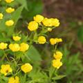 写真: 黄色花