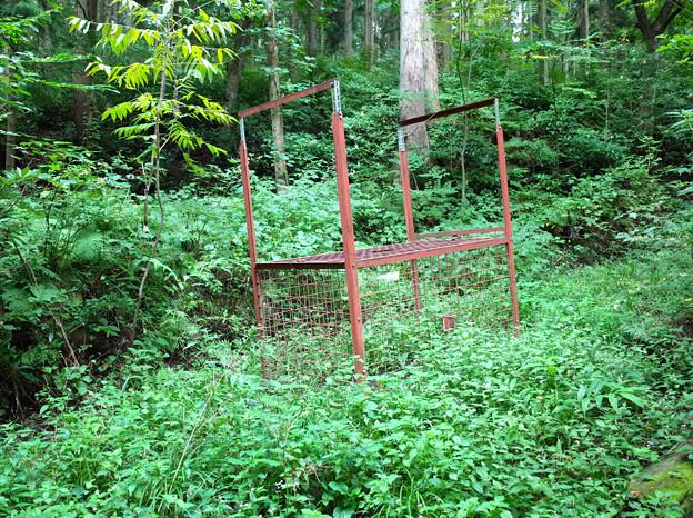 写真: 富山県県道67号線のクマ捕獲檻