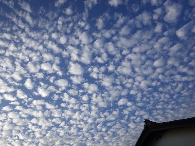 見上げたら、うろこ雲