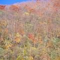 有峰林道小見線 すっかり葉が落ちてる