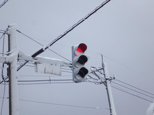 写真: 信号のLEDは、雪に弱い