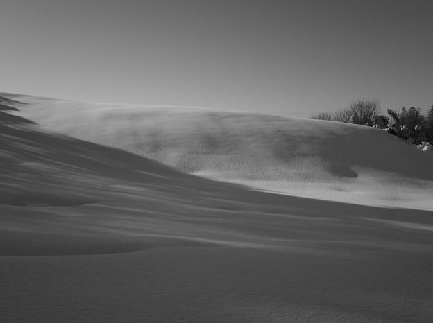 写真: 雪原
