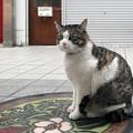 Photos: 道後温泉の猫