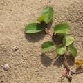 Photos: 砂から