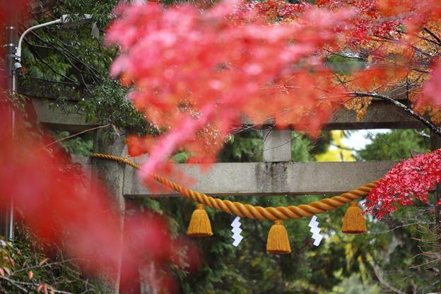 Photos: 鶏足寺02s