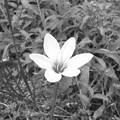 Photos: a flower