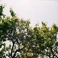 写真: 初夏の木漏れ日