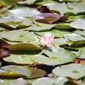 20170624_神代植物園