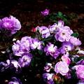 紫も良いね