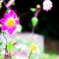 Photos: 飴細工みたいなお花