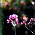 写真: 蜜を求めて