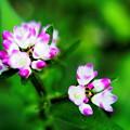 写真: チビ花