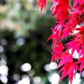 写真: 紅葉の季節