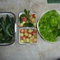写真: 今日の収穫