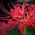 写真: 若花