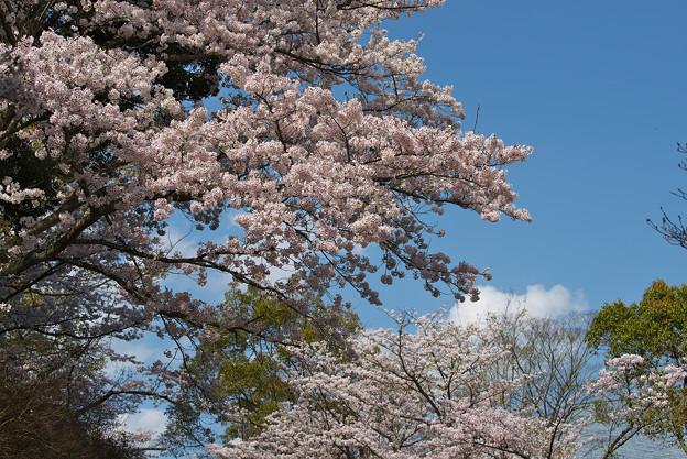 春の花色2-1