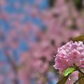 石楠花1-4