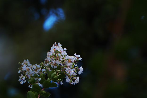 長月の花2