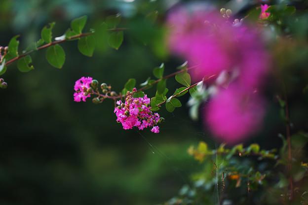 長月の花3