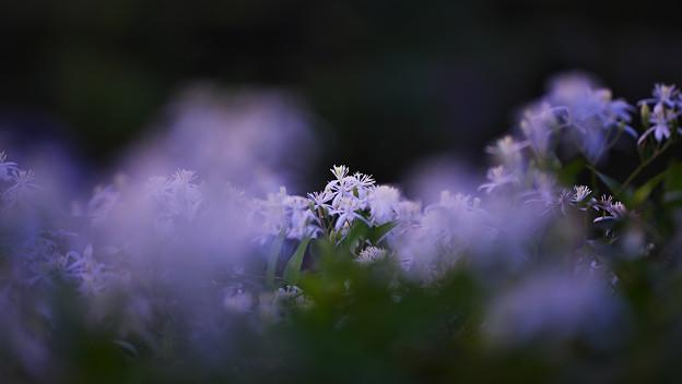 初秋 宵の彩2