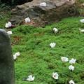 Photos: 「沙羅の寺」應聖寺(6)