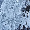 写真: 雪化粧 1