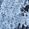 Photos: 雪化粧 1