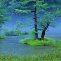 写真: 雨の明神池 1