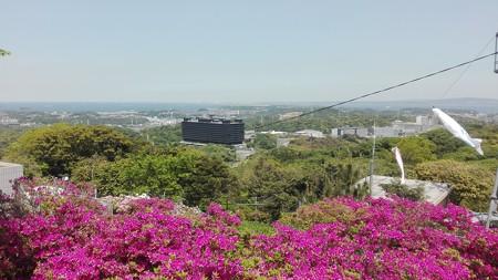 つつじの寺と武山から千葉方面へ