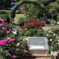 バラの庭園@鎌倉文学館