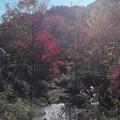 写真: 紅葉と川