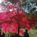 池の反射と紅葉かな@町田薬師池公園