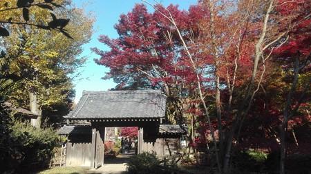古民家の門と紅葉@町田薬師池公園