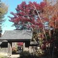 写真: 古民家の門と紅葉@町田薬師池公園