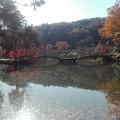 写真: 薬師池公園