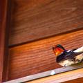 写真: 燕の住まう家屋