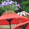 写真: 風流傘