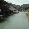 写真: 春の嵐山_1