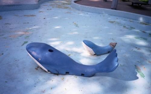 プール道のクジラさん